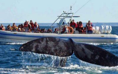 Visitando as baleias